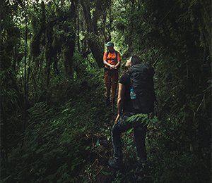 Vi vandrar genom varierande miljöer längst Inkaleden, bland annat blomstrande regnskog