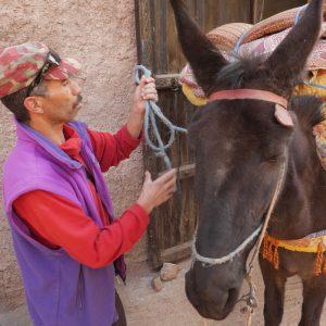 Upplev den marockanska kulturen med Swett