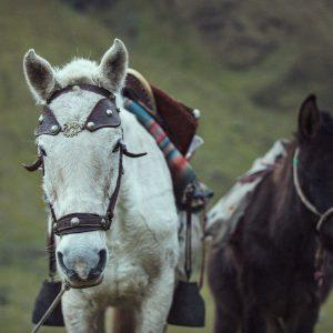 Njut hästturer i Machu Picchu