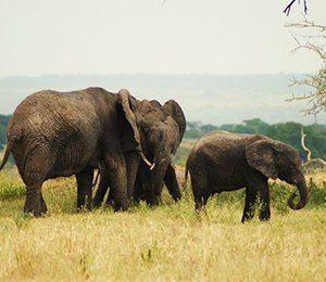 Efter turen till Kilimanjaro finns möjligheten att åka på safari eller till paradisön Zanzibar