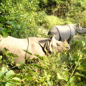 Förläng din resa till Everest base camp med extra safari