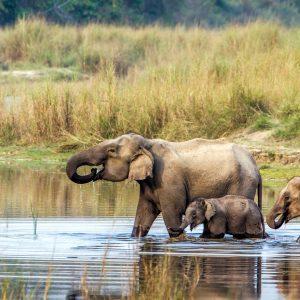 safari i nepal