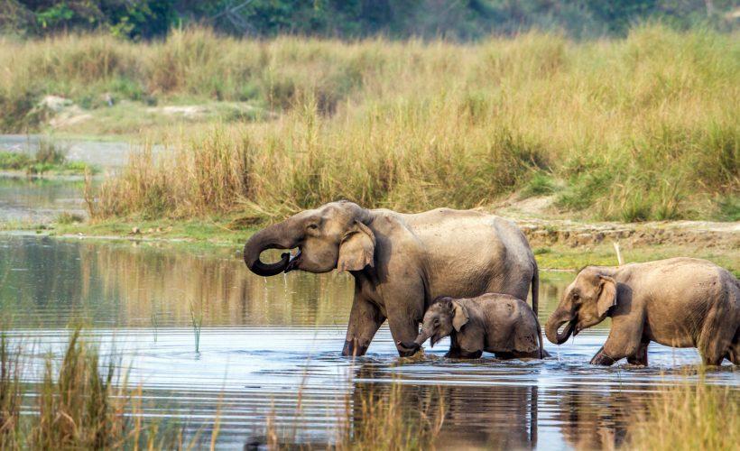 elefant chitwan nationalpark