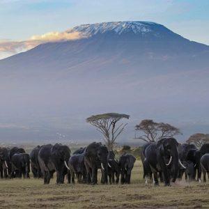Vandring på Kilimanjaro - Afrikas högsta berg
