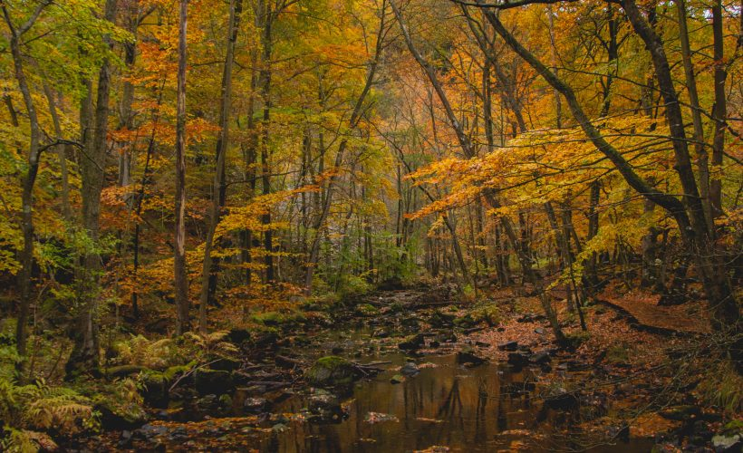 National park autumn 8