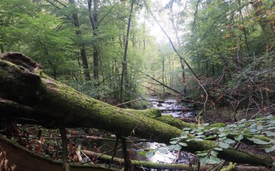 Urskogen i Söderåsen